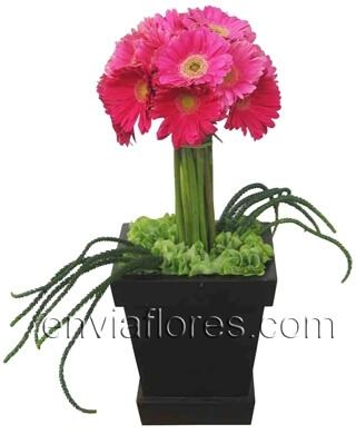 Topiario de 20 Gerberas color Rosa Intenso