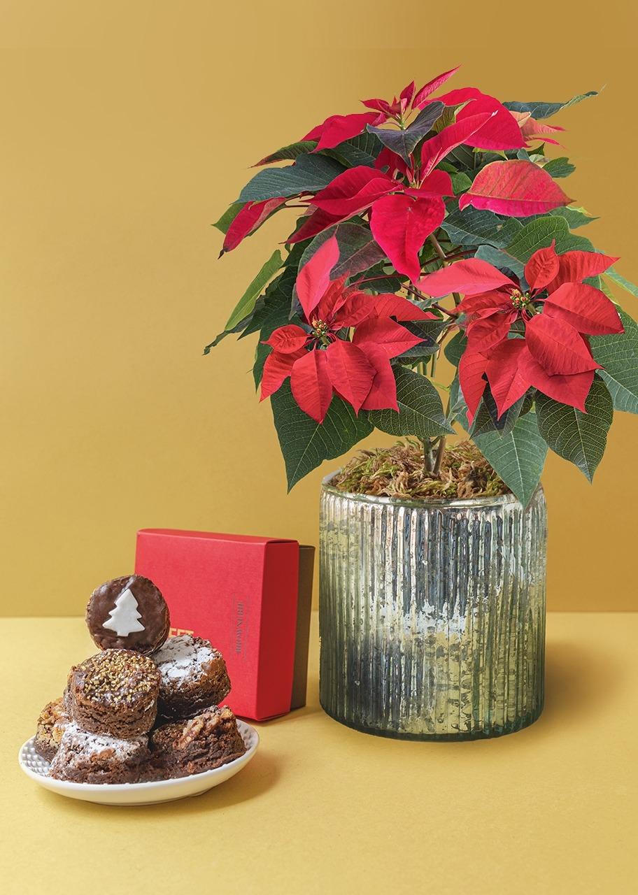 Imagen para Brownies 8 pz Navidad con Nochebuena - 1