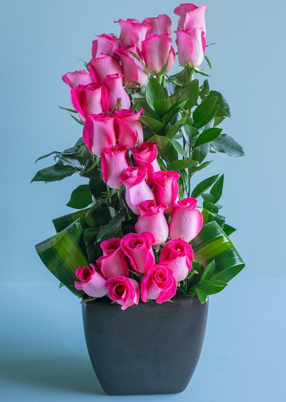 Imagen para Amor Infinito con 24 Rosas Fiusha - 1
