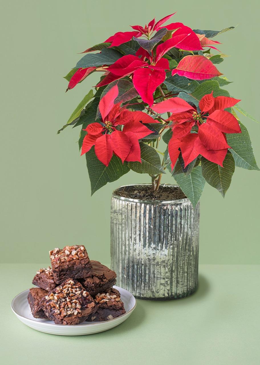 Imagen para Brownies 6 pz con Nochebuena - 1