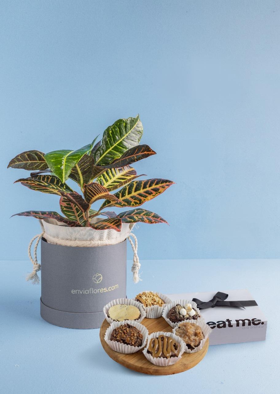 Imagen para Brownies 6 pz con Planta Decorativa - 1