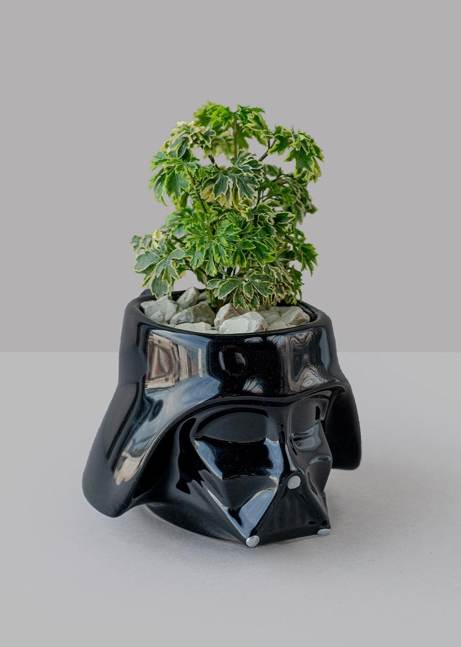 Imagen para Taza Darth Vader con planta aralea - 1