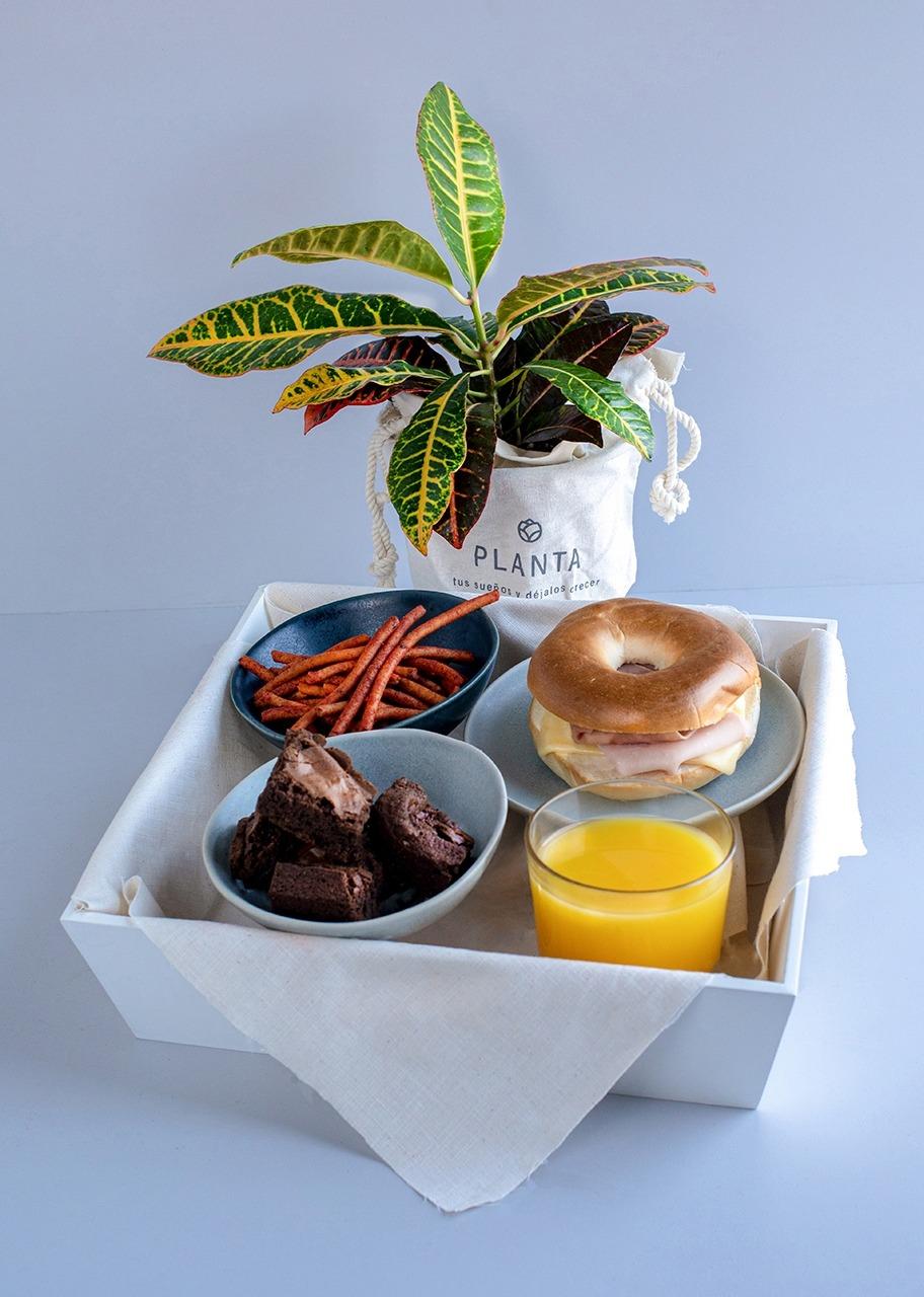 Imagen para Breakfast with Plant - 1