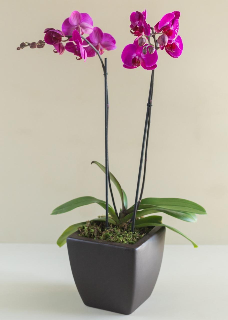 Imagen para Exquisita Orquídea Morada - 1