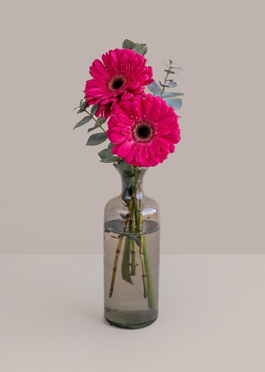 Imagen para Gerberas rosa intenso en violetero gris - 1