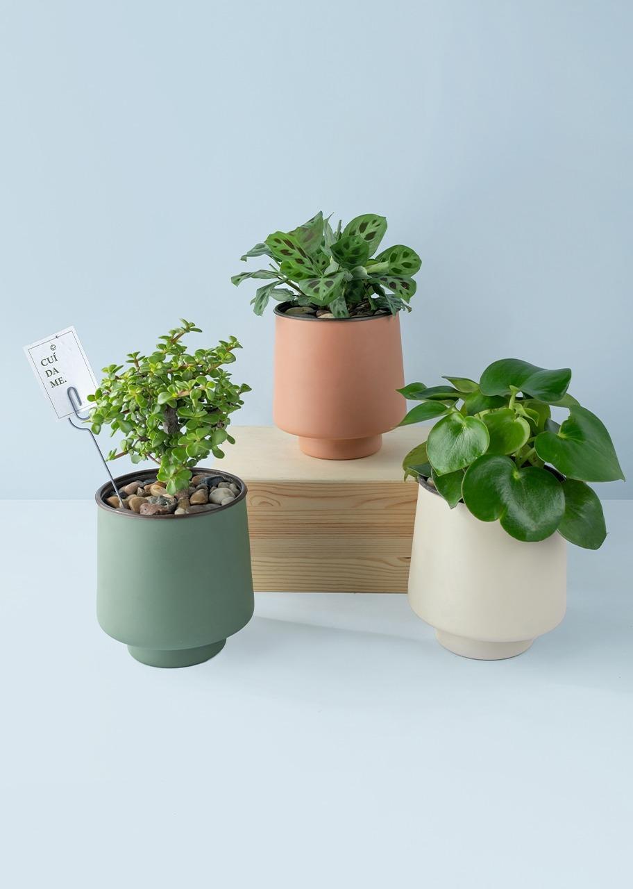 Imagen para Plant Kit on the basis - 1