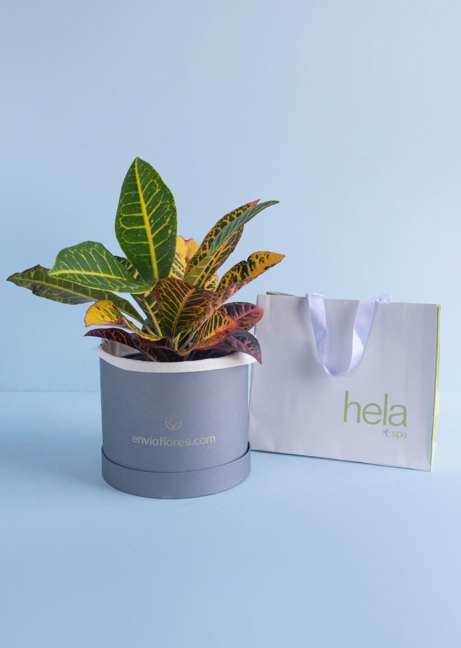 Imagen para Masaje Sueco con Planta Decorativa - 1