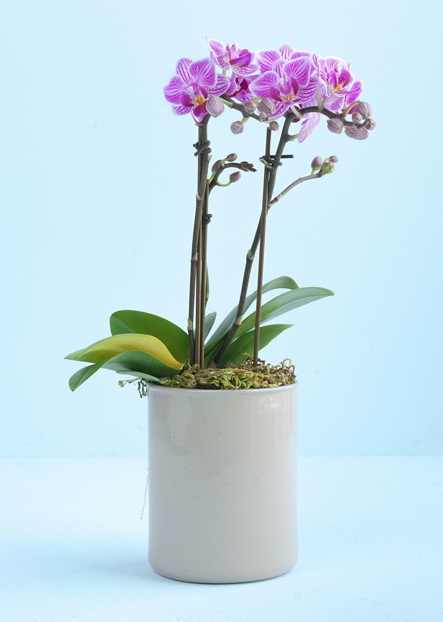 Imagen para Mini Orquídea morada - 1