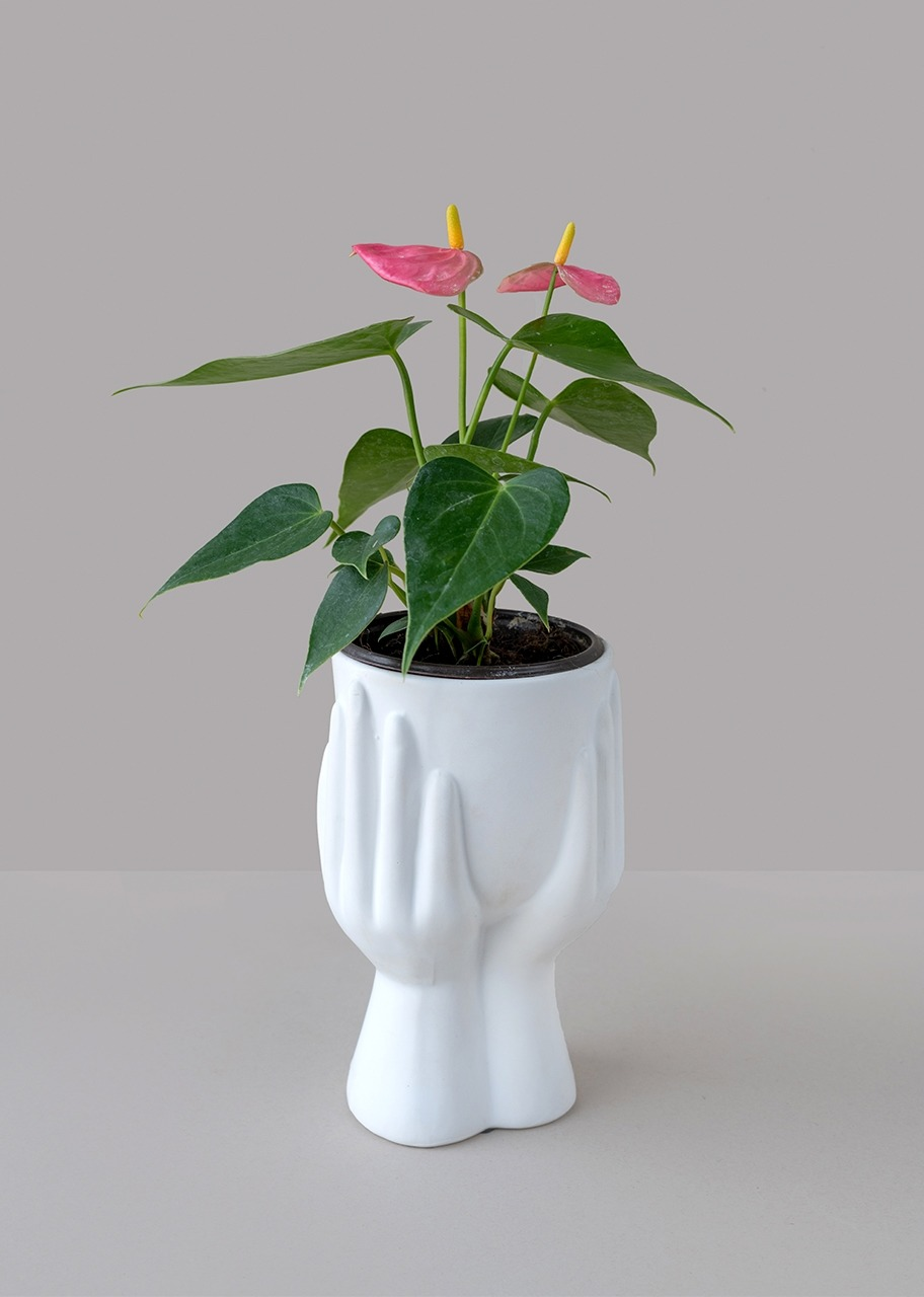 Imagen para Maceta Manitas con Planta Mini Anturio - 1