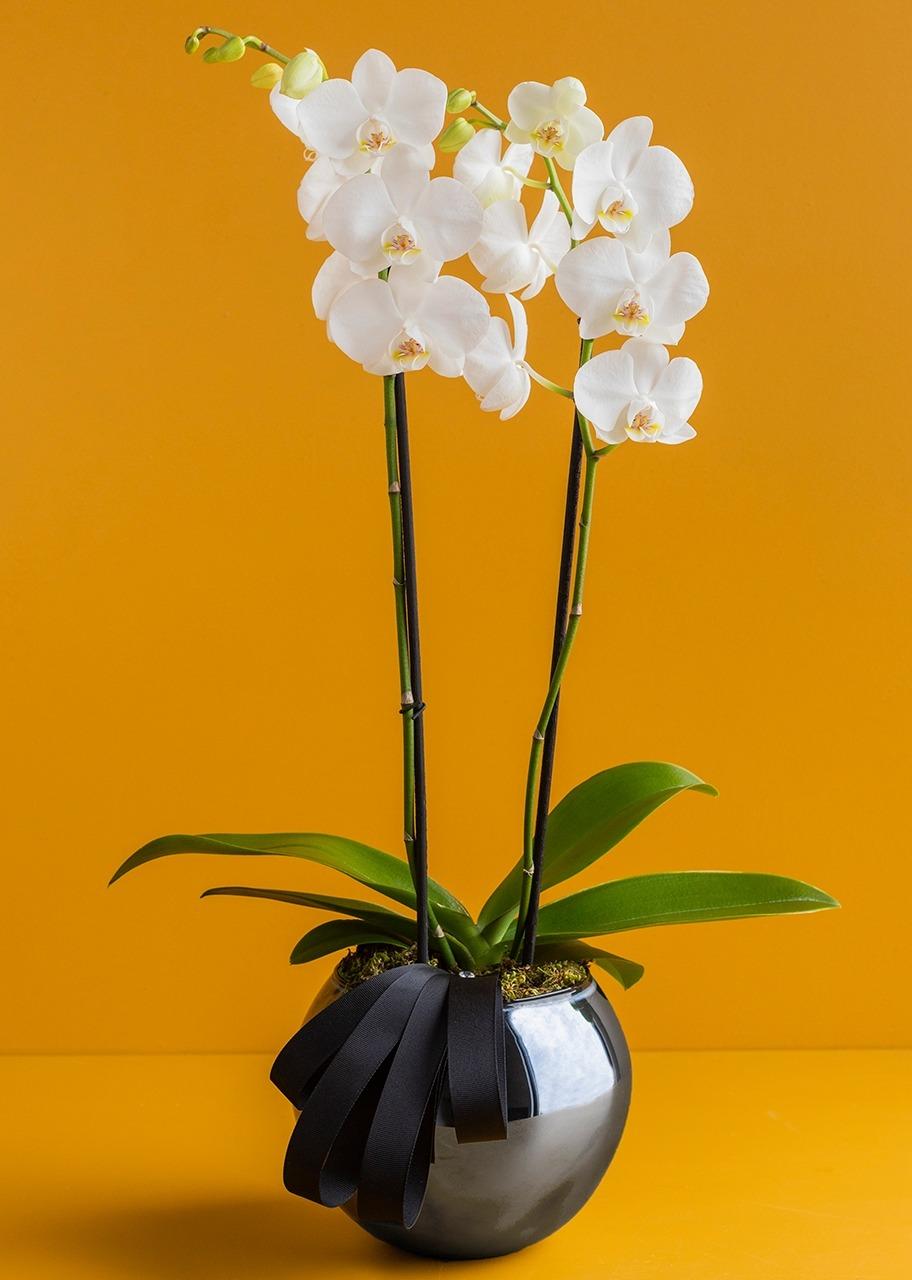 Imagen para Orquidea blanca en base negra - 1