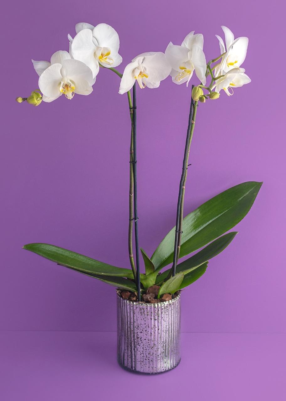 Imagen para Orquidea blanca en base platinada - 1