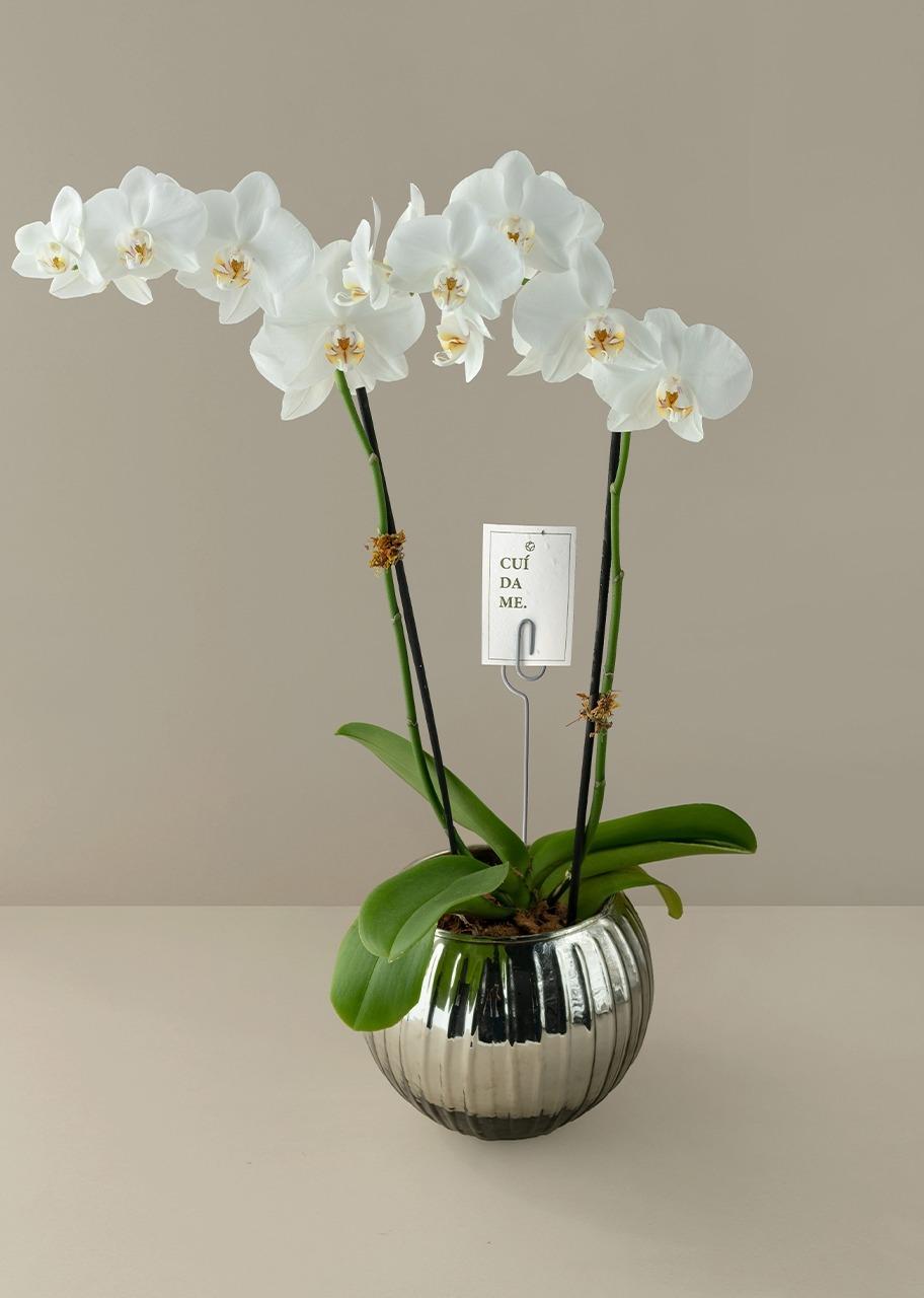 Imagen para Orquídea Blanca en Pecera Platinada - 1