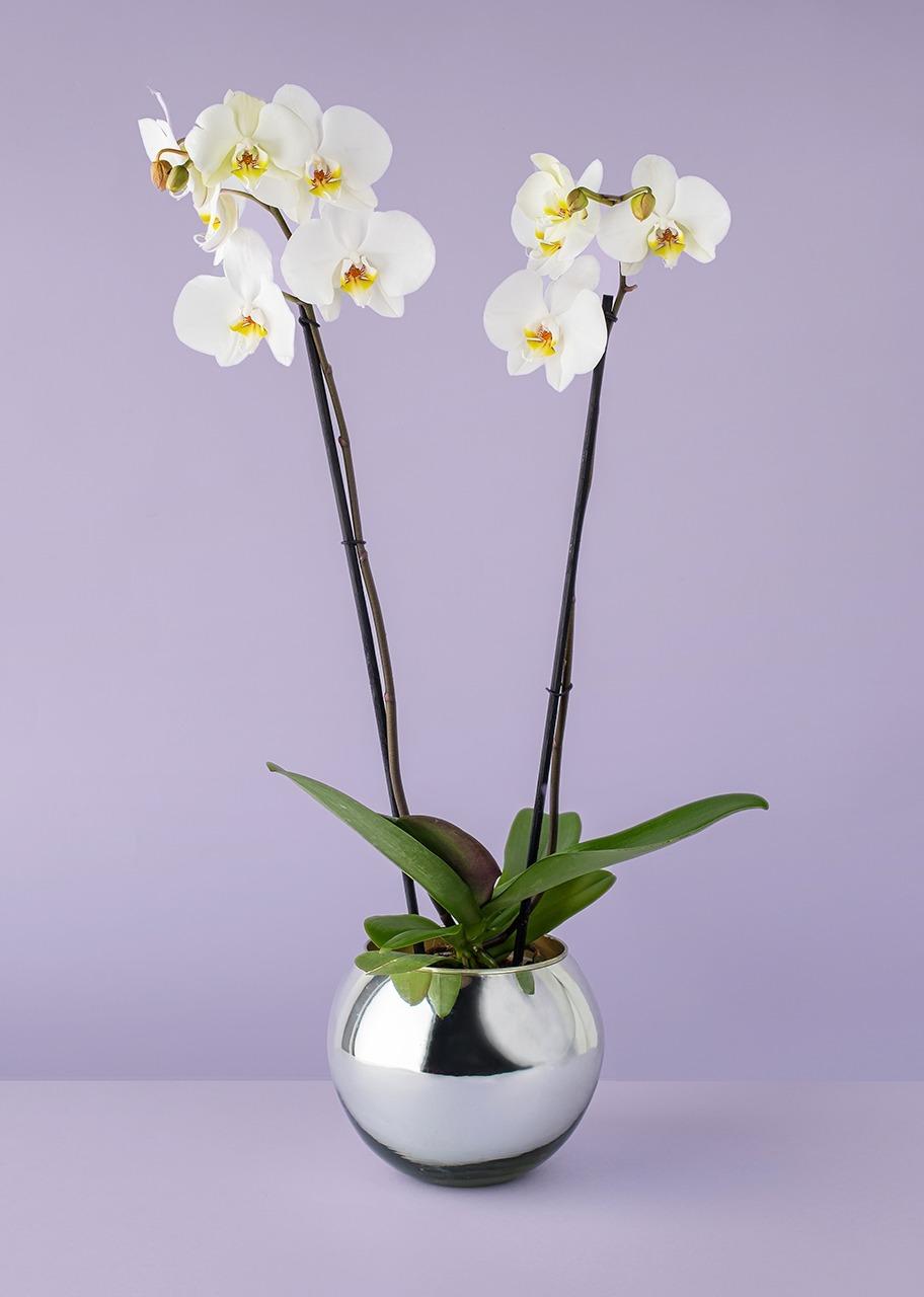 Imagen para Orquídea blanca en base platinada - 1