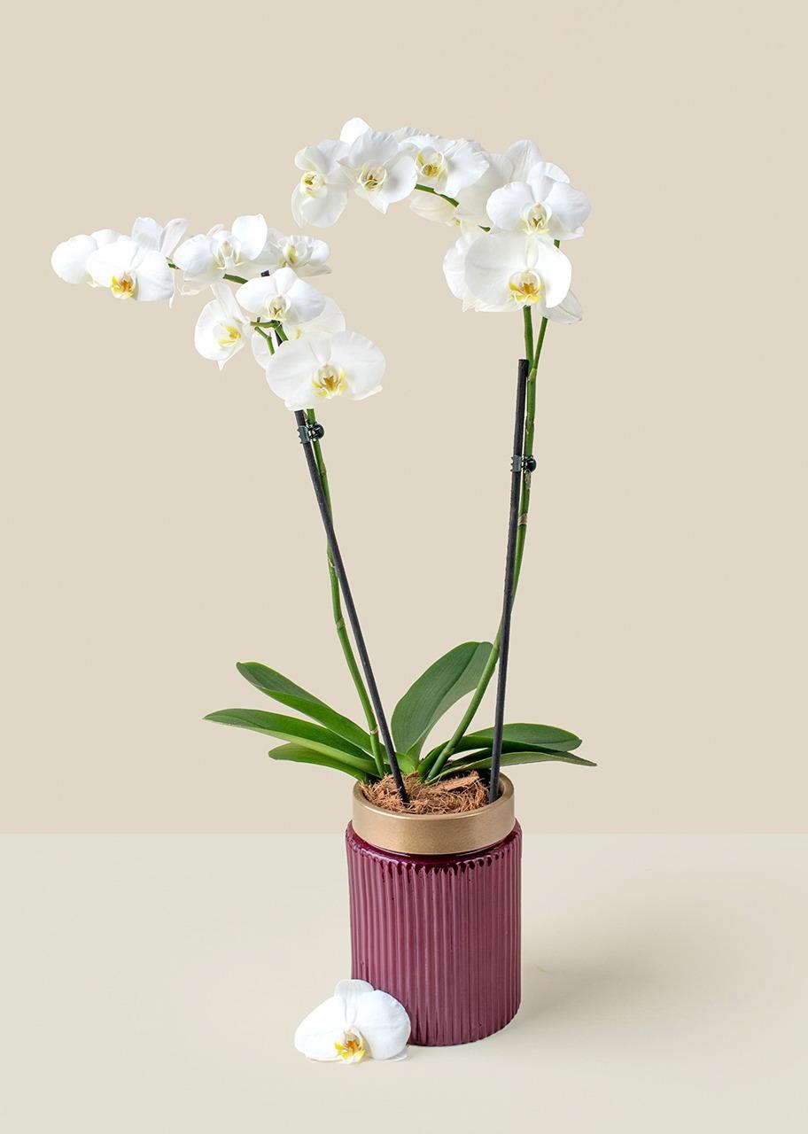 Imagen para Orquidea blanca en base violeta - 1