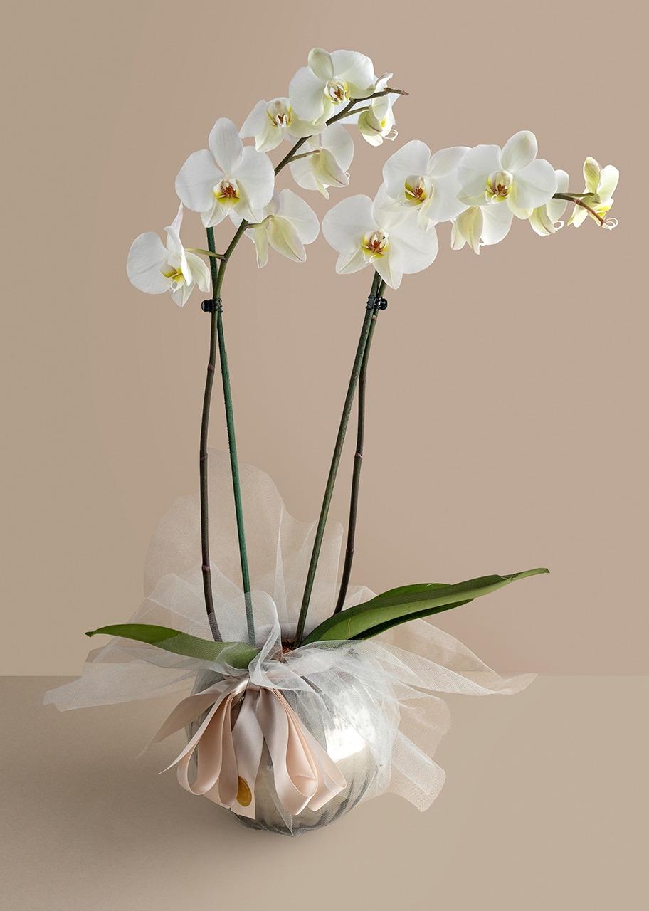 Imagen para Orquidea blanca con distintivo blanco en pecera gris - 1