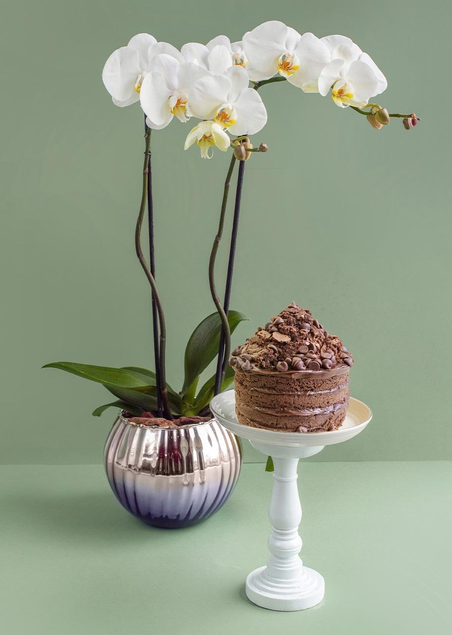 Imagen para Orquidea con pastel de chocolate - 1