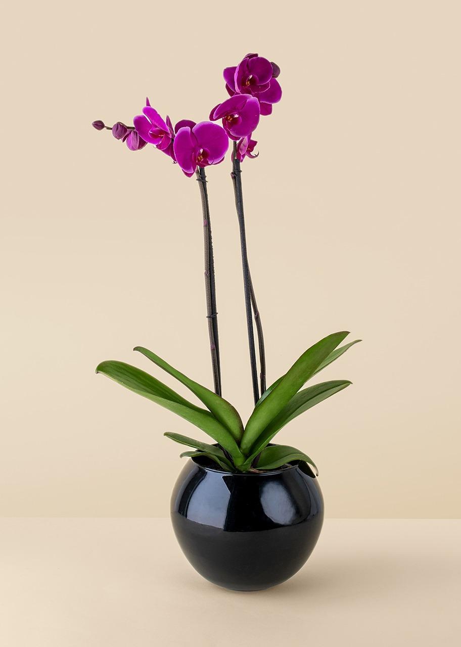 Imagen para Orquidea morada en base negra - 1
