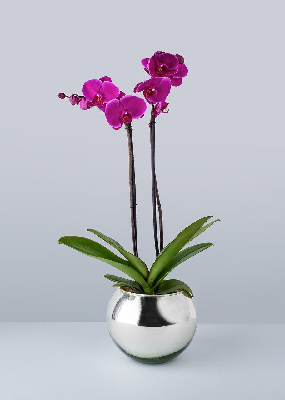 Imagen para Orquídea morada en base platinada - 1