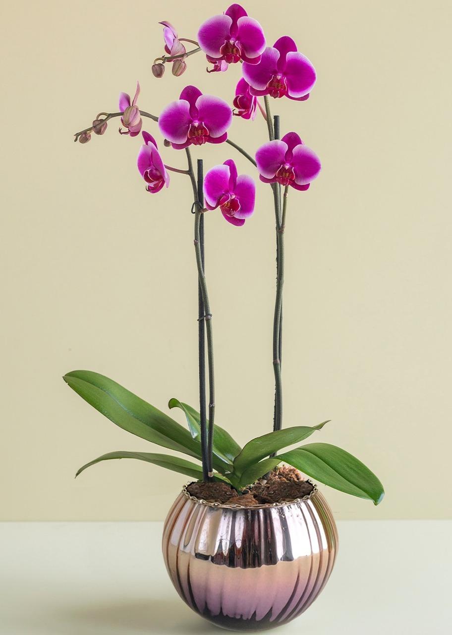 Imagen para Orquídea morada en base rose gold morada - 1