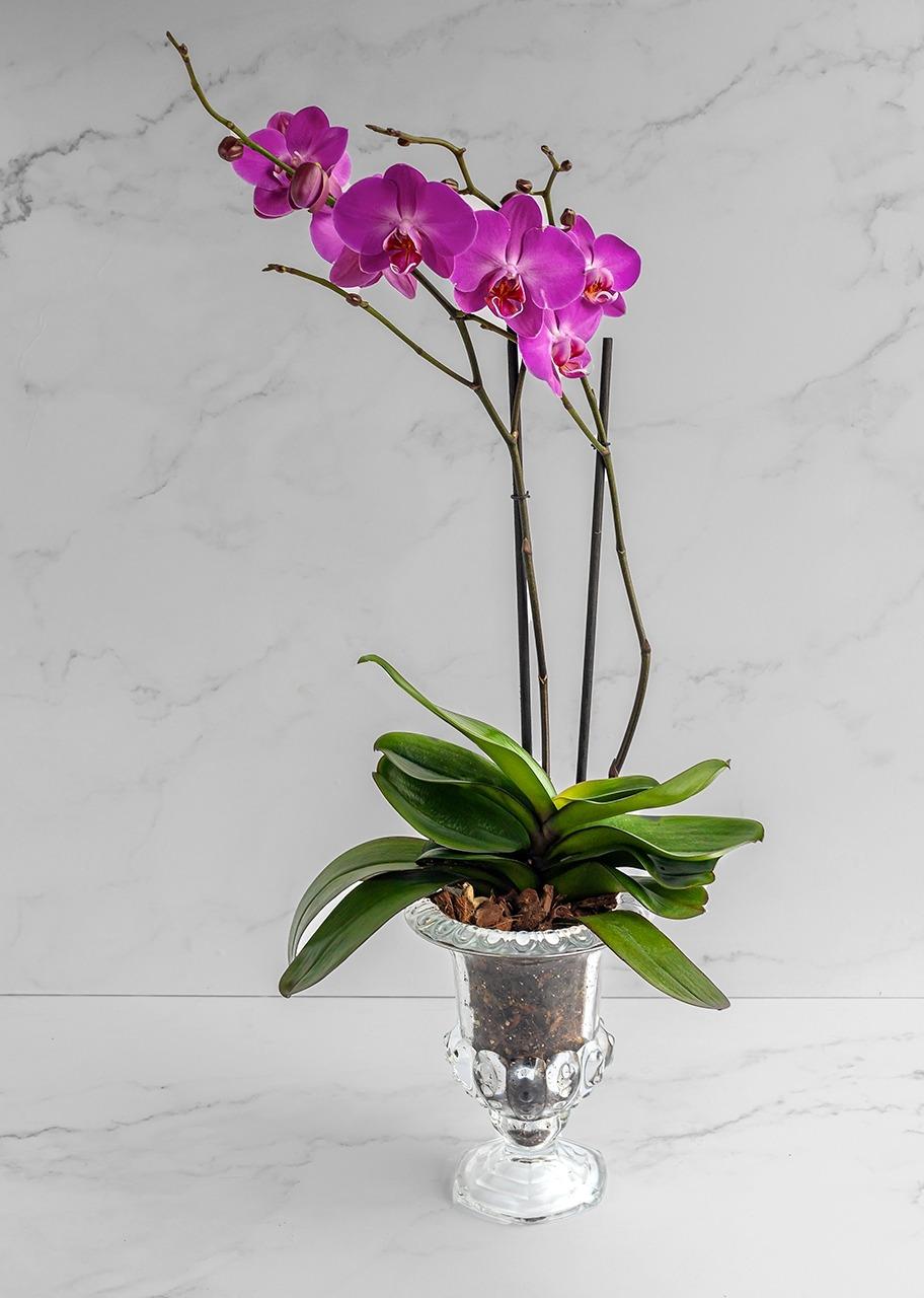 Imagen para Orquídea morada en copa - 1