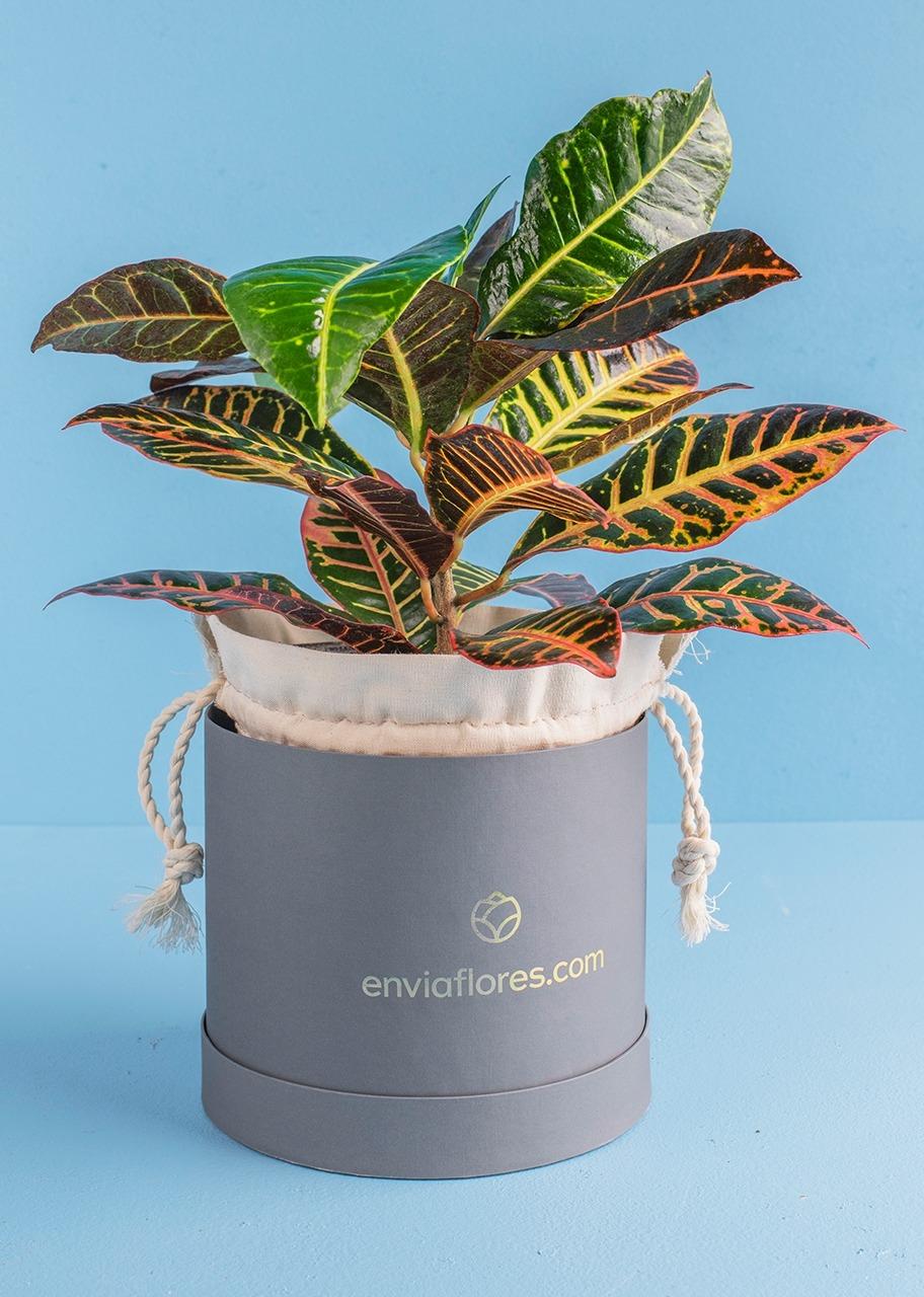 Imagen para Planta Decorativa - 1