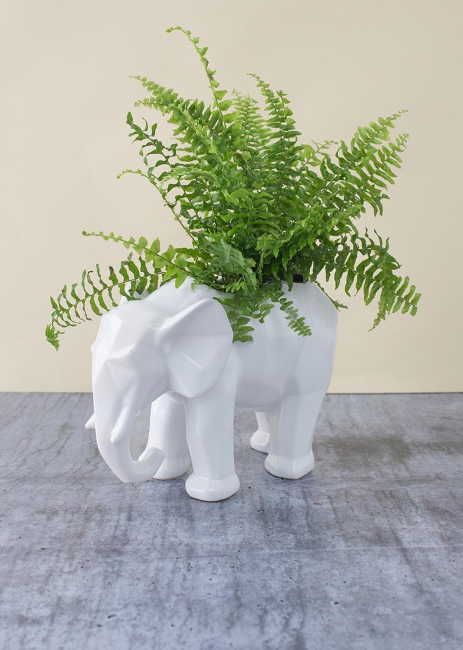 Imagen para Planta Helecho Silver en base de Elefante - 1