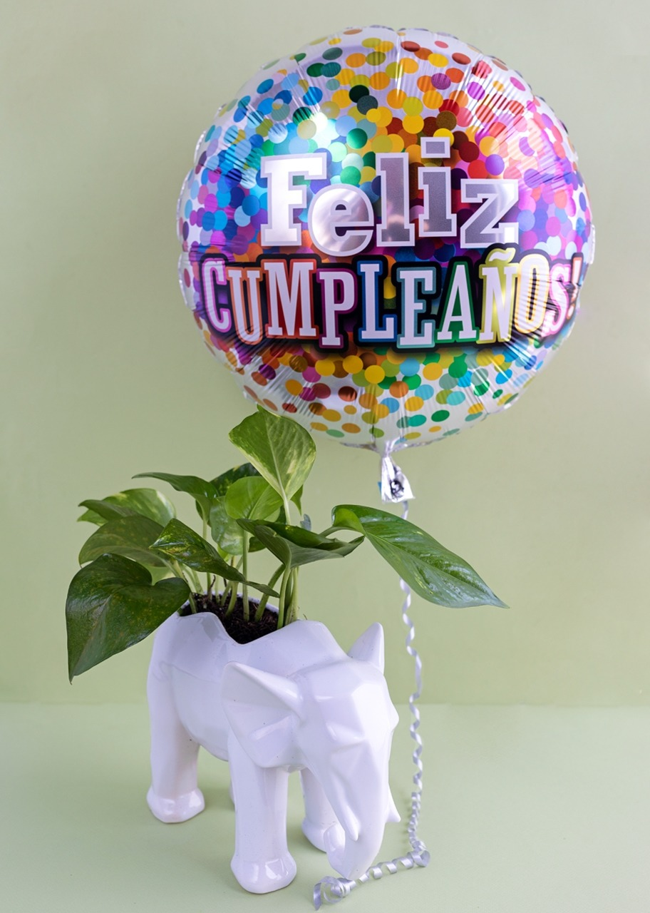 Imagen para Planta Teléfono con Globo de Cumpleaños - 1
