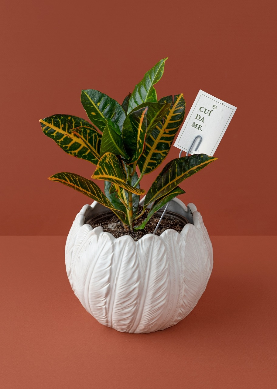Imagen para Plant crot in feather base - 1