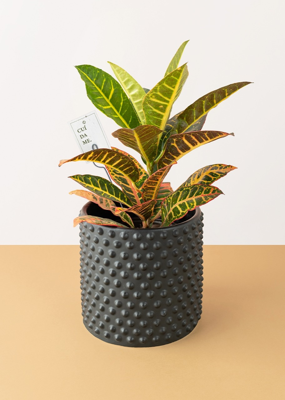 Imagen para Plant crot in black base - 1
