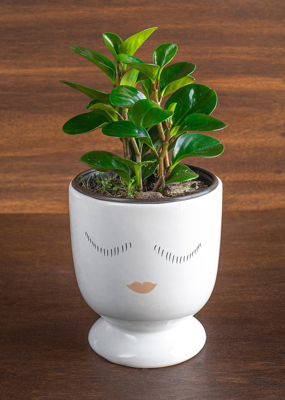 Imagen para Planta Peperomia en base de cerámica - 1