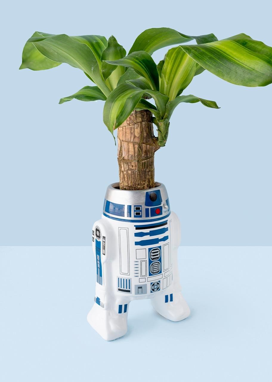 Imagen para Taza R2D2 con planta palo de brasil - 1