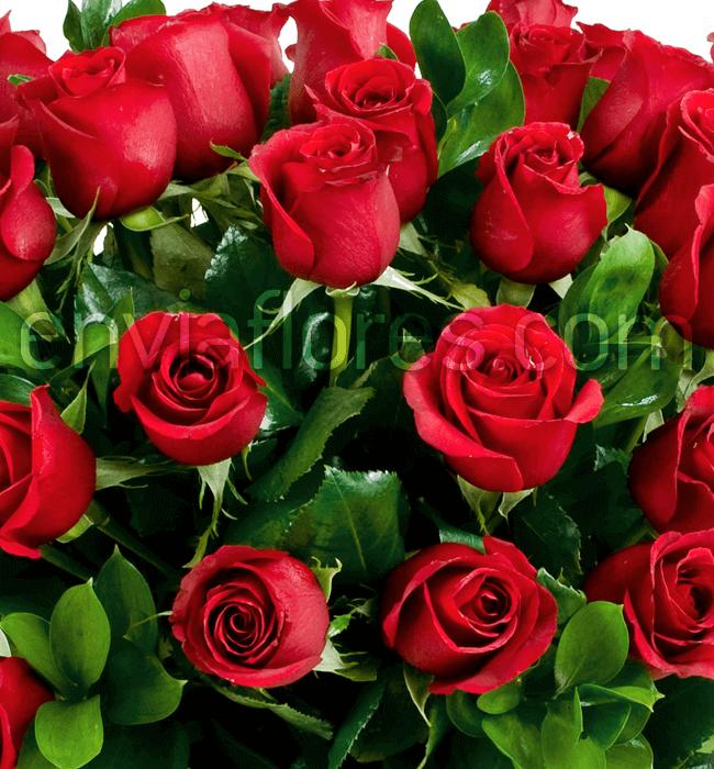 Imagen para 75 Rosas Rojas - 1