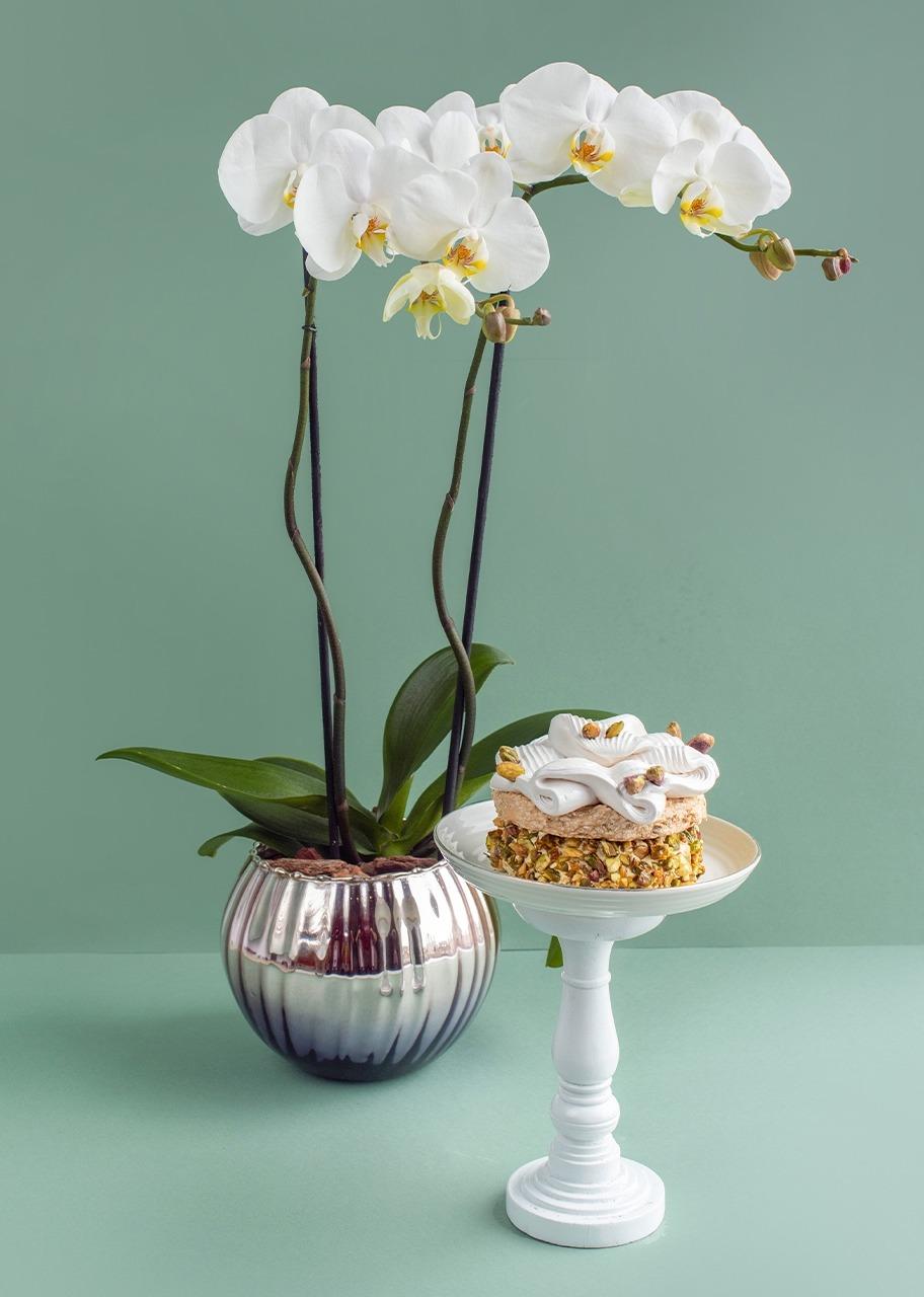 Imagen para Orquidea blanca con pastel pistache - 1